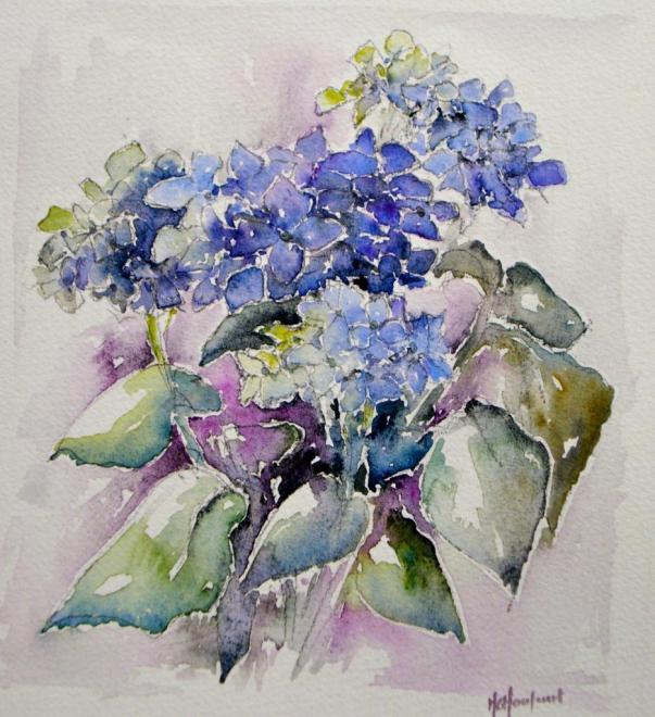 Hortensia mauve